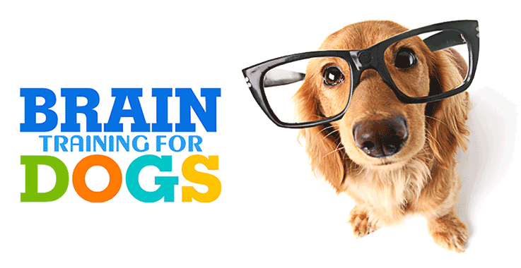Brain Training For Dogs Full Review, Save Water Team